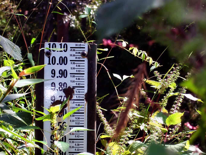 Snapshot Saturday: Weeds