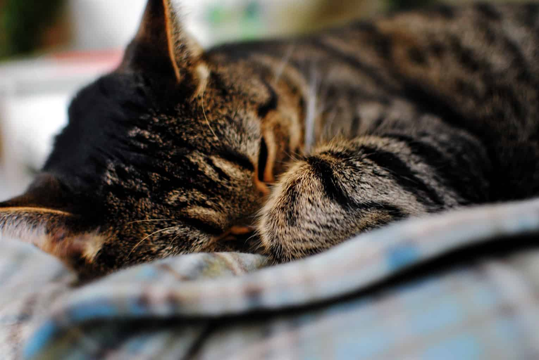 Snapshot Saturday: Sleeping In