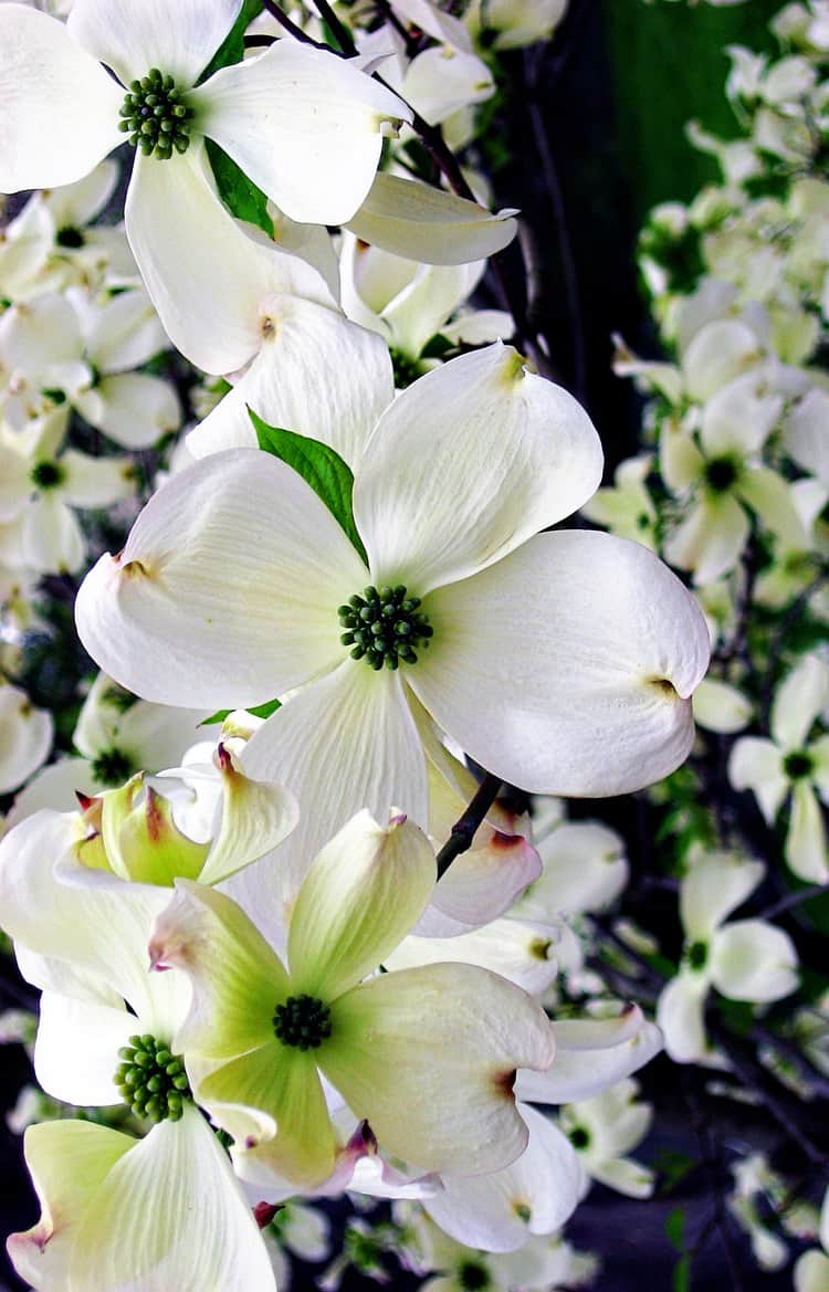 Snapshot Saturday: Late Blooms