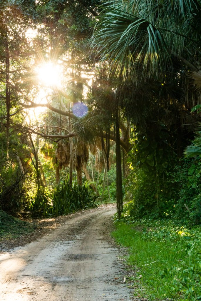 Sandy paths | What to expect while visiting Cabbage Key